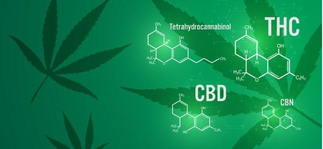 Is Medical Marijuana With THC Better Than CBD?